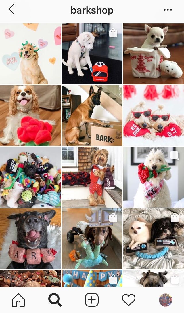 BarkShop Instagram Feed